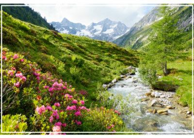 Paysage de verdure et de plantes, inspiration des produits bien être et cosmétiques Just
